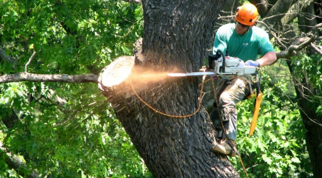 Tree Lopping Services